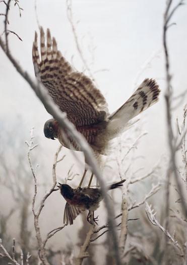 http://www.laetitiagessler.com/files/gimgs/th-7_oiseau2.jpg