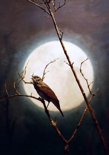 http://www.laetitiagessler.com/files/gimgs/th-7_oiseau_accentuation.jpg